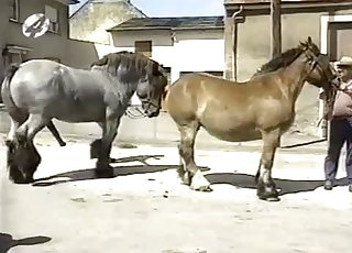 Muscled horses have awesome doggystyle