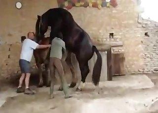 Pferd xxx A Star