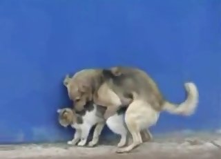 Dog bangs a cute kitten in rear end style