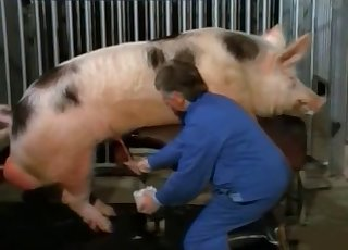 Two pigs have epic doggy style bang-out